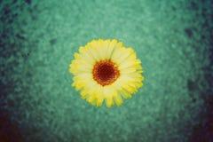 Fleur jaune sur l'eau Photographie stock libre de droits