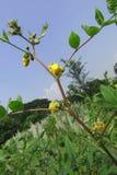 Fleur jaune sur la branche Photo libre de droits