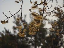 Fleur jaune sur la branche d'arbre photo stock
