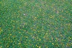 Fleur jaune sur le fond d'herbe verte Images libres de droits