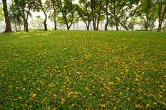 Fleur jaune sur le fond d'herbe verte Photo stock