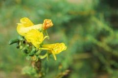 Fleur jaune sur le fond de l'herbe verte photo libre de droits