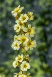 Fleur jaune sur le fond diffus photographie stock