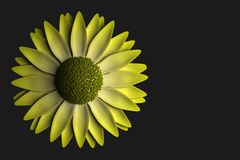 Fleur jaune sur le fond foncé Photographie stock libre de droits