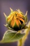 Fleur jaune sur le fond pourpre photographie stock