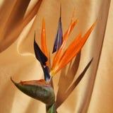 Fleur jaune, symbole de bonheur Photographie stock libre de droits