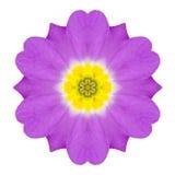 Fleur kaléïdoscopique pourpre Mandala Isolated de primevère sur le blanc Image stock