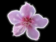 Fleur légère Photo stock