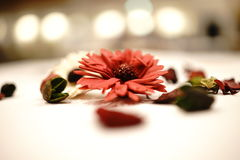 Fleur légère Photographie stock libre de droits