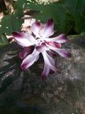 Fleur - la beauté à elle est la meilleure Photographie stock