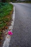 Fleur laissée par la route Image libre de droits