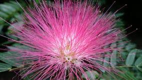 Fleur lumineuse Photo libre de droits