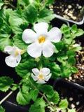 Fleur lumineuse Photographie stock libre de droits