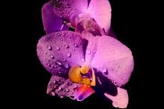 Fleur lumineuse d'orchidée au soleil Photographie stock