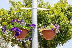 Fleur lumineuse dans le pot Photos stock