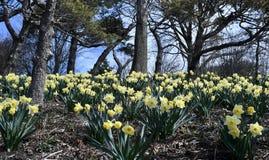 Fleur lumineuse de ressort dans le jardin image libre de droits