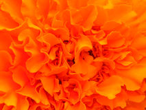 Fleur lumineuse orange. Photos stock