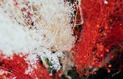 Fleur mélangée Images stock