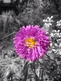 Fleur, macro, Image stock