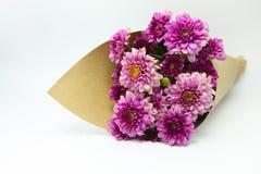 Fleur magenta de dahlia Images libres de droits