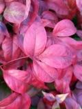 Fleur majestueuse d'automne image libre de droits