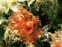 Fleur marine Image stock