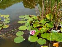 Fleur merveilleuse photos libres de droits