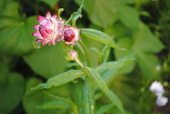 Fleur merveilleuse 1 Photos stock