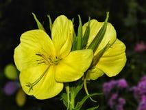 Fleur merveilleuse photo libre de droits