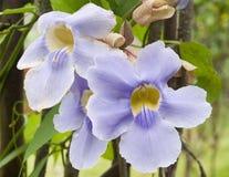 Fleur mexicaine Images libres de droits