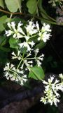 Fleur mignonne Photographie stock libre de droits