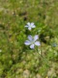 Fleur mignonne Photo stock