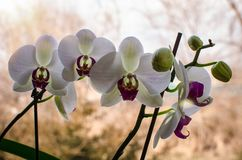 Fleur mignonne image libre de droits
