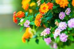 Fleur minuscule Photos libres de droits