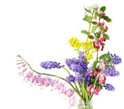 Fleur minuscule images libres de droits