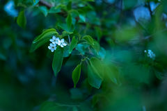 Fleur minuscule de fleur sur un brunch Images libres de droits