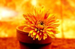 Fleur mise en pot abstraite 3 photographie stock