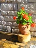 Fleur mise en pot orange Photo libre de droits