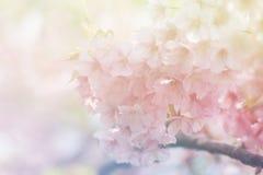 Fleur molle de style de couleur et de tache floue Image libre de droits