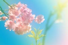 Fleur molle de style de couleur et de tache floue Photographie stock libre de droits