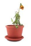 Fleur morte photographie stock libre de droits