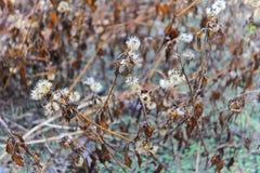 Fleur morte grise Images stock