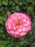 Fleur naturelle photo libre de droits