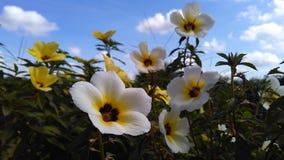 Fleur naturelle Photos libres de droits