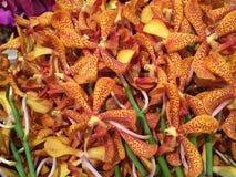 Fleur naturelle de beauté à Bangkok Image libre de droits