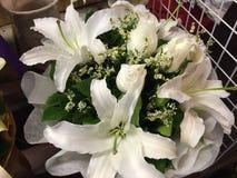 Fleur naturelle de beauté à Bangkok Photographie stock libre de droits