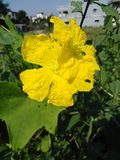 Fleur naturelle pour libre image stock