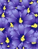 Fleur observée bleue Image libre de droits