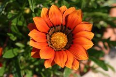 Fleur orange Photos libres de droits