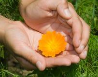 Fleur orange Photographie stock libre de droits